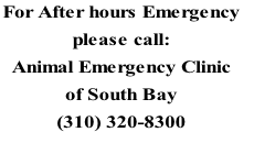 For After hours Emergency  please call:  Animal Emergency Clinic  of South Bay (310) 320-8300